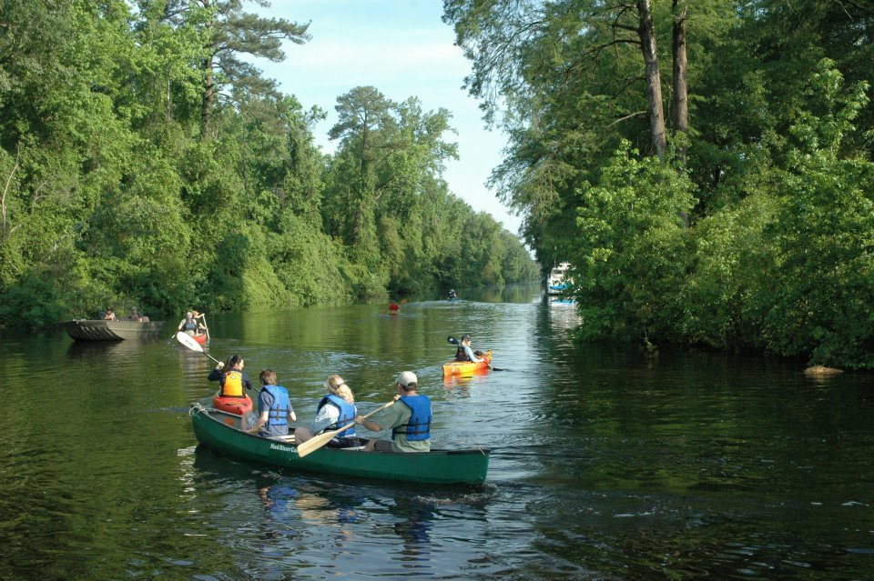 Summer Paddle at the Dismal Swamp